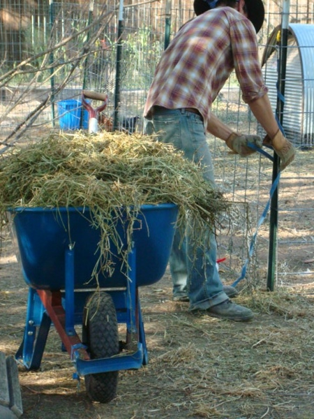 John takes spent hay from goat pen for sheet mulching new garden beds.