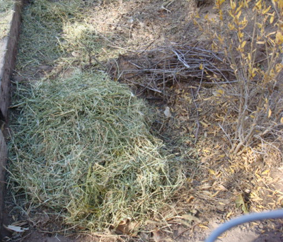 Top sponge with hay from goat pen