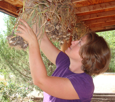 Jen hangs the garlic to cure under our front porch.