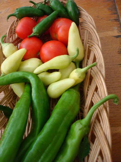 Jalapenos, Stupice tomatoes, Santa Fe Grande chiles, and New Mexico Green chiles