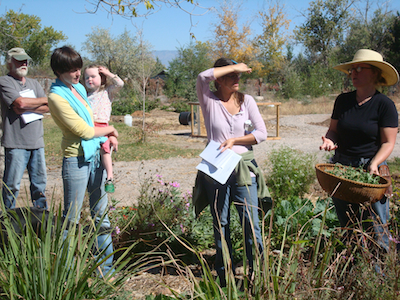 Jen shows workshop participants how to harvest catnip for making tincture.